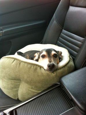 Samson in the car.
