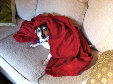 Samson loves to burrow. Here he is on Wednesday morning on the sofa.
