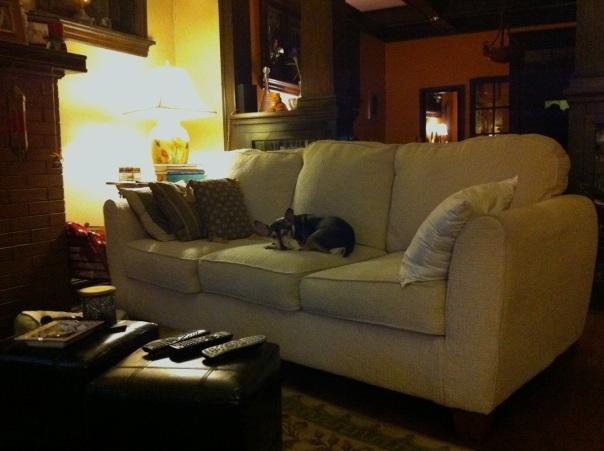 Samson.sleeps