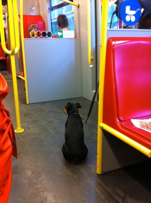 I love seeing dogs on the subway!