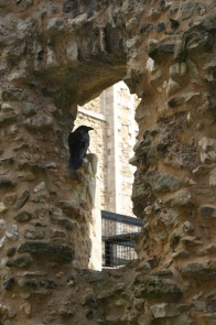 The ravens will never leave the Tower.