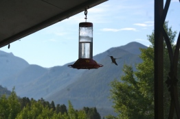 A hummingbird this morning, just outside of hotel room.