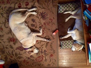 The dogs took over the living room floor.