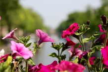 Flowers on the bridge over our canal.