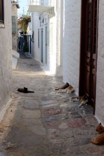 This island loves its cats.