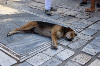 I was surprised at how many sleeping dogs were just plum tired at the Acropolis.