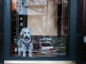 Auggie is always waiting at the door.