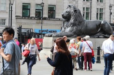 Trafalgar Square lions!