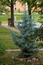 A fir.