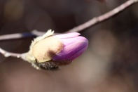 frost-buds-1