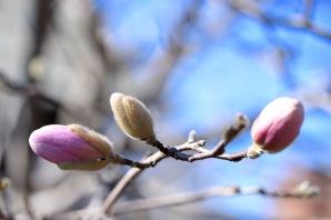 frost-buds-3