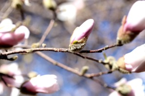 frost-buds-6