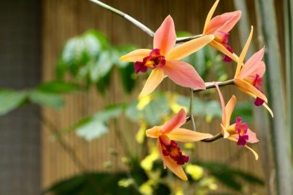 orchids17-11