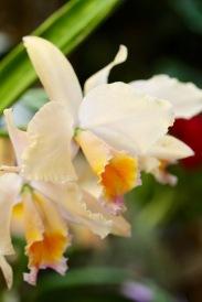orchids17-12