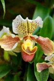 orchids17-13
