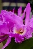 orchids17-18