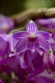 orchids17-20