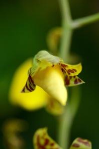 orchids17-23
