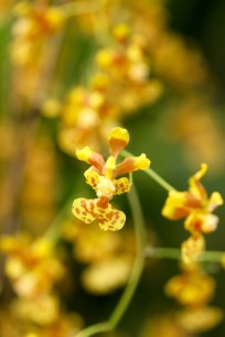 orchids17-24