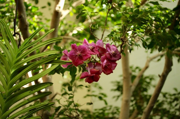 orchids17-27
