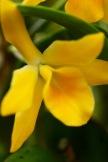 orchids17-29