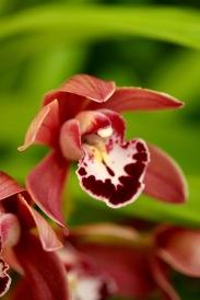 orchids17-31