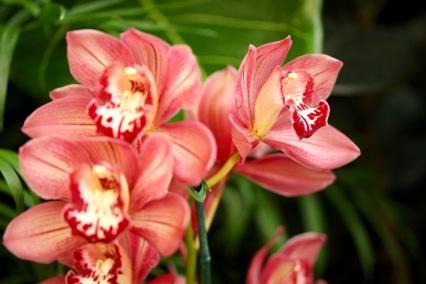 orchids17-32