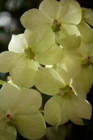 orchids17-33