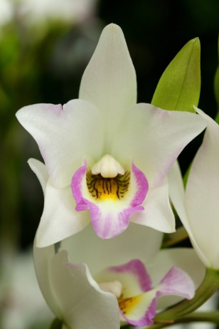 orchids17-5