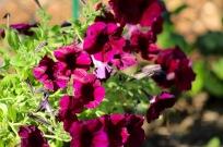gardenjuly29 - 1