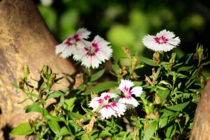 gardenjuly29 - 7