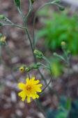 springplanting - 7