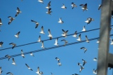 Seagulls fleeing a rooftop as the train whizzes by.