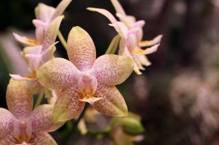 orchid-macro-10