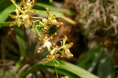 orchid-macro-11