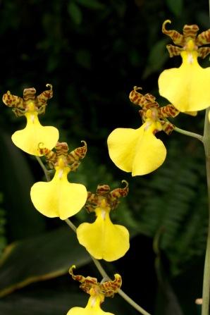 orchid-macro-13