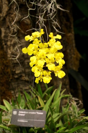 orchid-macro-14