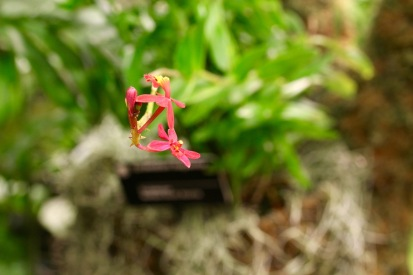 orchid-macro-15