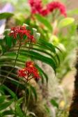 orchid-macro-16