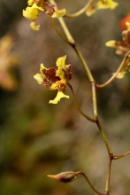 orchid-macro-2