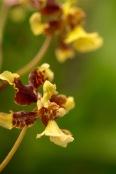 orchid-macro-3