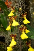orchid-macro-4