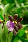 orchid-macro-5