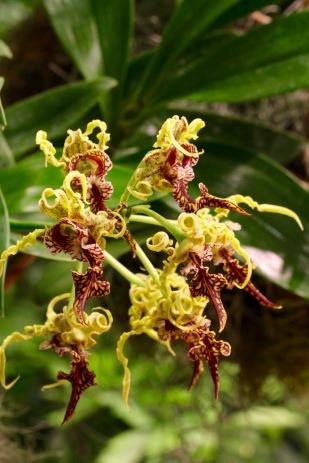 orchid-macro-6