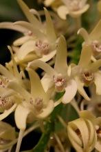 orchid-macro-7