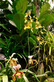 orchid19 - 10