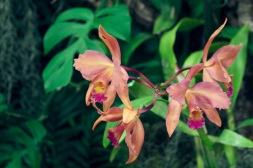 orchid19 - 14