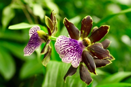 orchid19 - 19