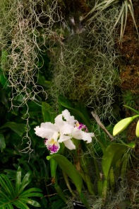 orchid19 - 2