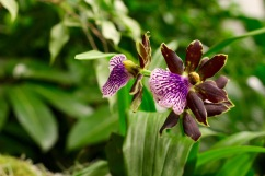 orchid19 - 20
